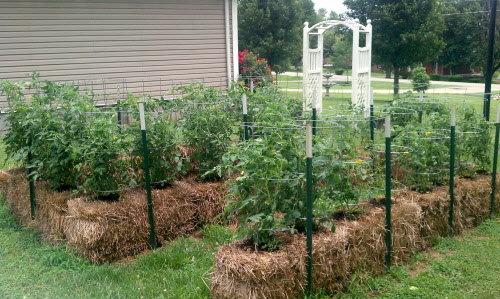 No Till Gardening Gardens For Cheap Kates